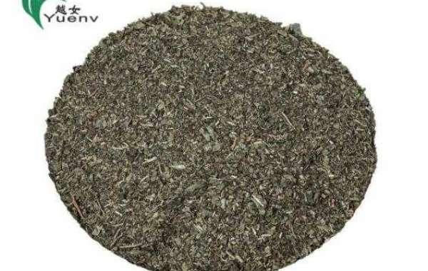Advantages Of Drinking Gunpowder Green Tea